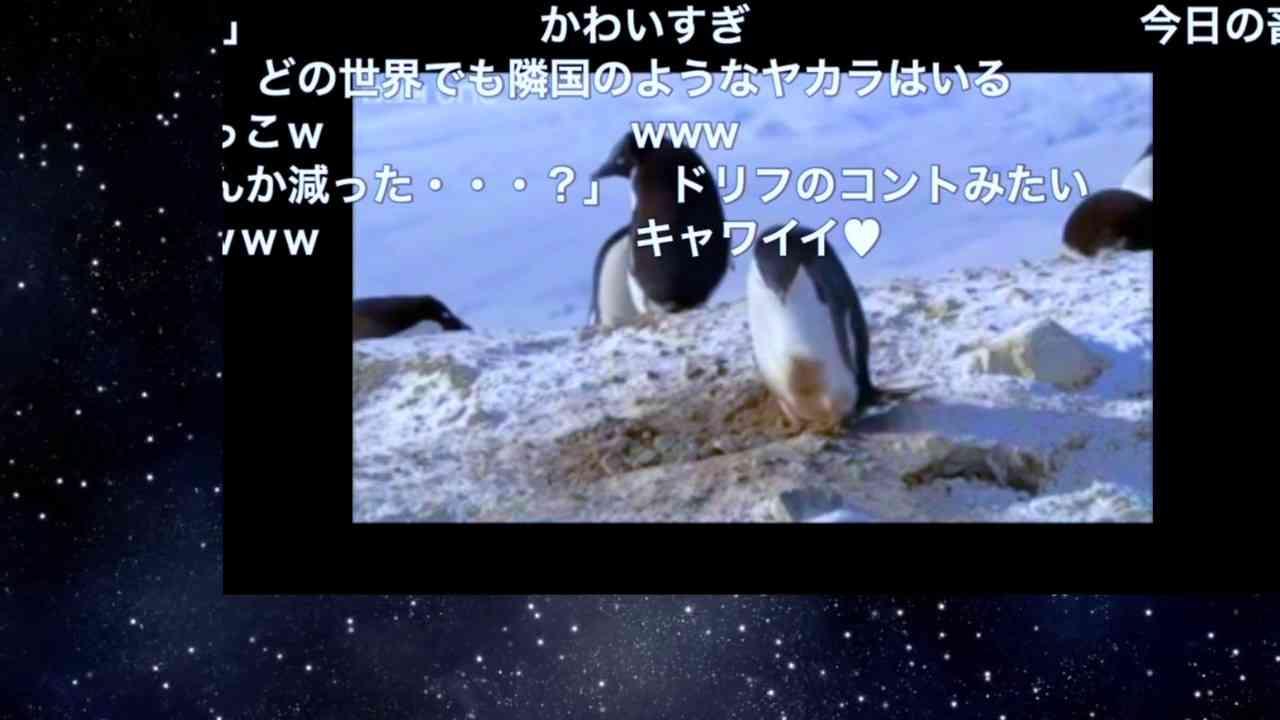 【コメントつき】キュン死注意!真面目なペンギン&ズル賢いペンギン - YouTube