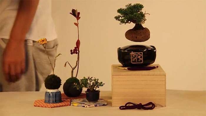 ラピュタは家にあったんだ!永久磁石で浮かぶ盆栽がカッコいい!