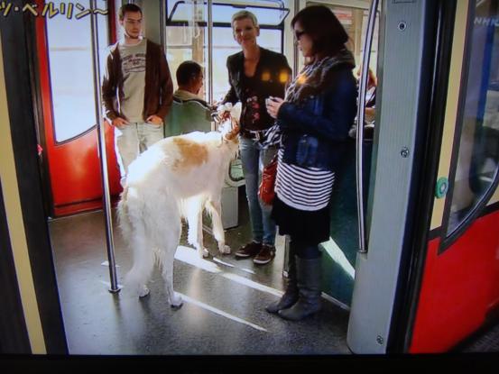 NYの地下鉄で「バッグに入らないサイズの動物」の持ち込みを禁止した結果…