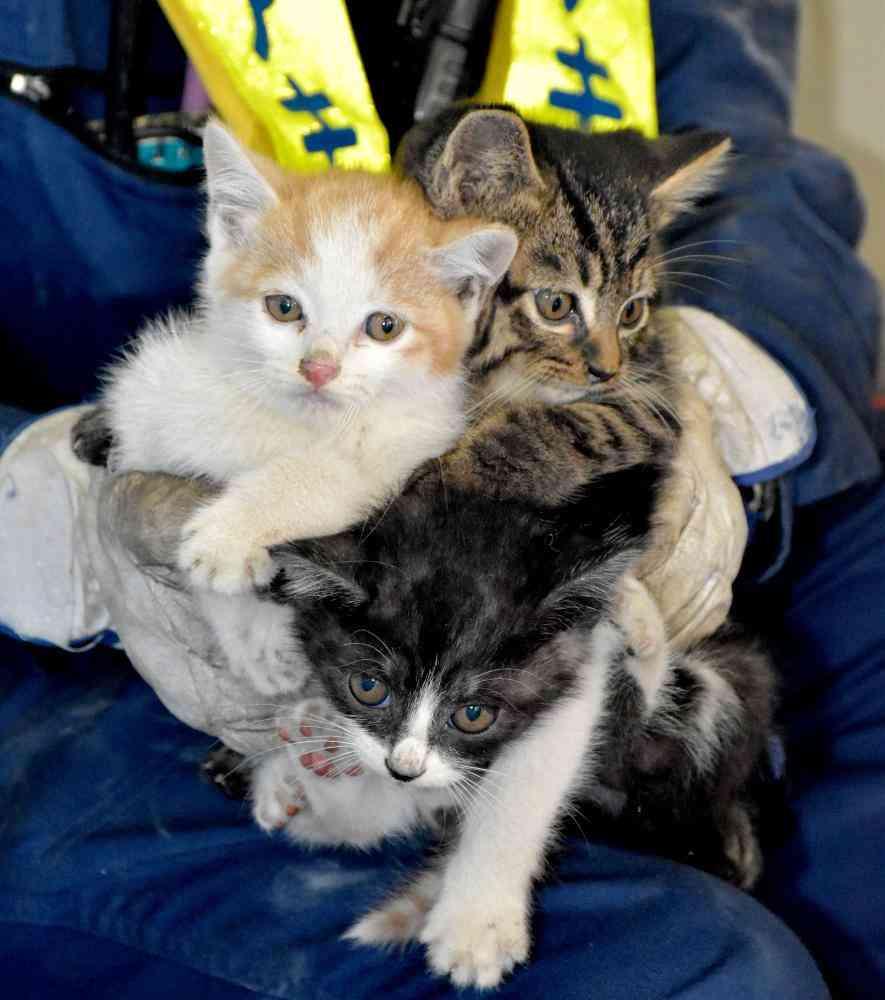 荒川沖駅でまた猫を救出、壁内部に3匹入り込む「いったいどこから入るのか」