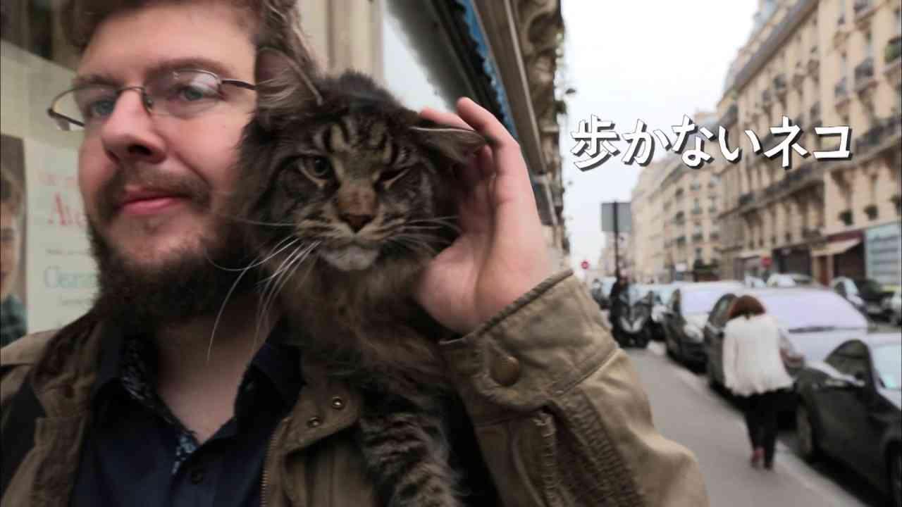 岩合光昭の世界ネコ歩き 劇場版 予告①1分30秒版 - YouTube