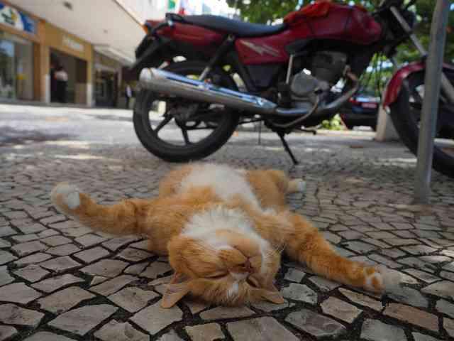 猫が跳ぶ、寝転がる!「岩合光昭の世界ネコ歩き」劇場版の写真解禁 - 映画ナタリー