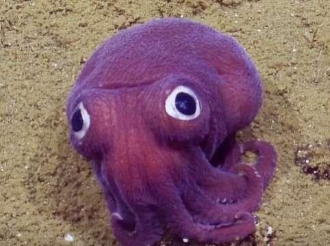 調査員爆笑…深海で撮影された謎生物 - 動画 - Yahoo!映像トピックス