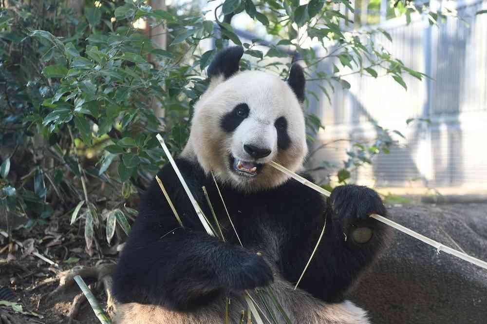 全文表示 | パンダ、和歌山でバンバン誕生 上野の赤ちゃん、騒ぎすぎでは? : J-CASTニュース