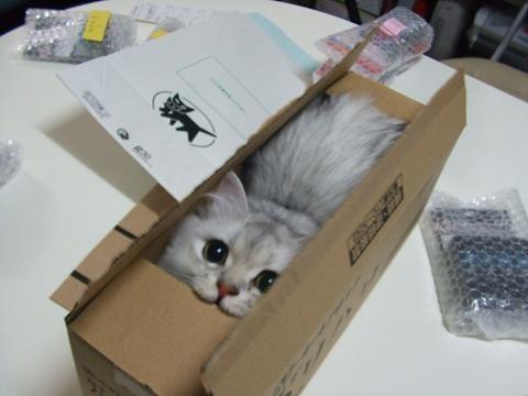 【画像】「うちの猫がトイレに行くとカタツムリになる…これが証拠写真」