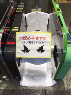 ツバメの巣で「改札機閉鎖」  JR鎌倉駅の対応に称賛相次ぐ