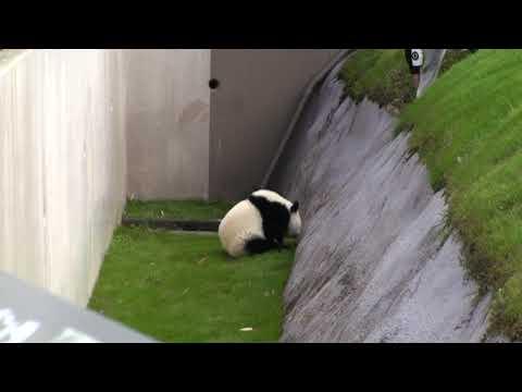 アドベンチャーワールド パンダ (2009/11/04) - YouTube