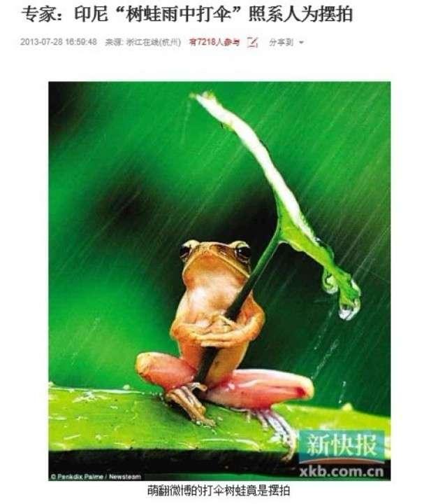 「葉っぱの傘をさすカエル」の写真、実は作り物!?動物虐待... - Record China