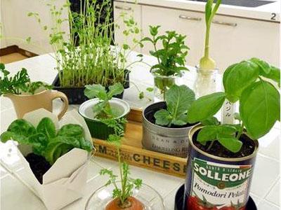 再生野菜を育ててる方、語りましょう〜