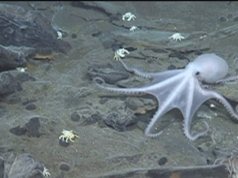 Spooky video of 'lost world' sea life deep in the ocean - YouTube