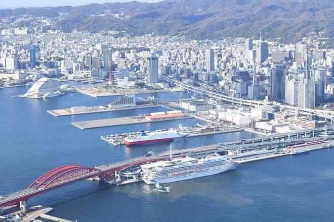 有毒アリ、神戸港敷地でも発見 環境省、目視で100匹