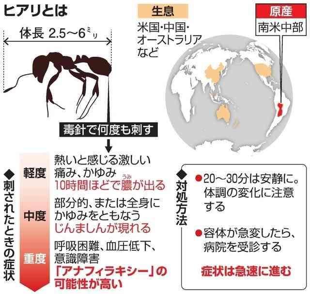 強毒「ヒアリ」国内初確認 環境省「侵入否定できぬ」
