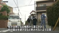 デング熱発症患者が蚊に刺される 世田谷区 | NNNニュース