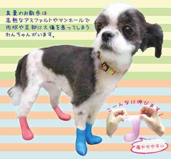 「守ってくれてありがとう」愛犬の足を保護する『長靴』に賞賛の声
