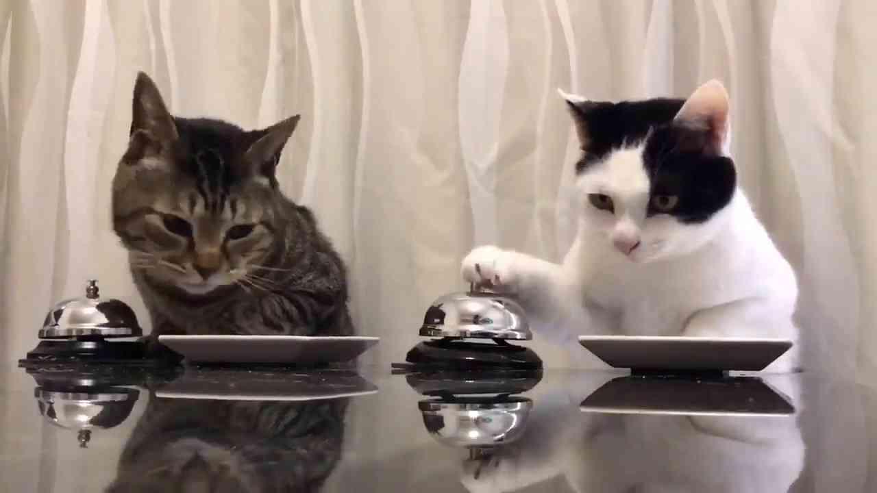Cats : Waiter Please!! - YouTube