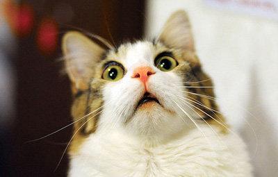 消臭スプレーのせいでペットが肝臓疾患に!?有名なあの消臭剤の使い方を間違うと危ない!!
