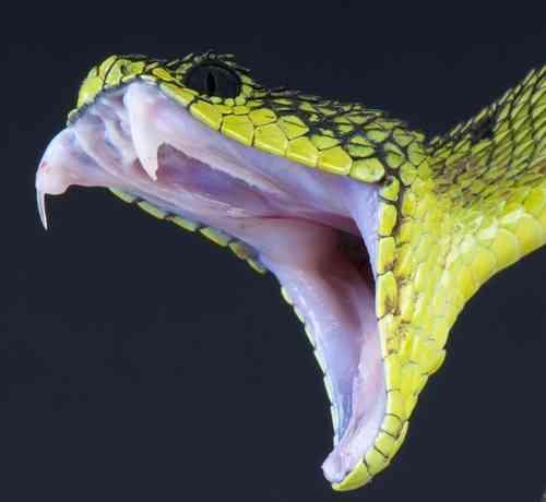 毒蛇に噛まれた夫、妻を噛む   Narinari.com