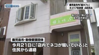 鹿児島市「猫カフェ」 17匹放置 動物愛護法違反か (MBC南日本放送) - Yahoo!ニュース