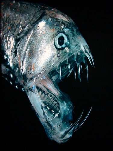 深海魚について話すトピ