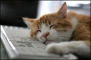 寝落ちするトピ