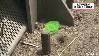 ヒアリ、殺虫剤入り餌の設置は逆効果と専門家指摘「かえってヒアリを入りやすくしてしまう」