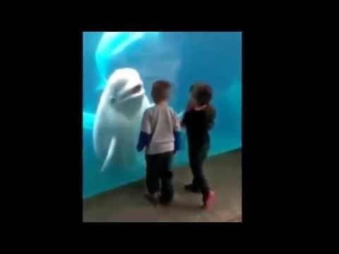 海外の水族館でシロイルカが子供をビックリさせる動画 - YouTube