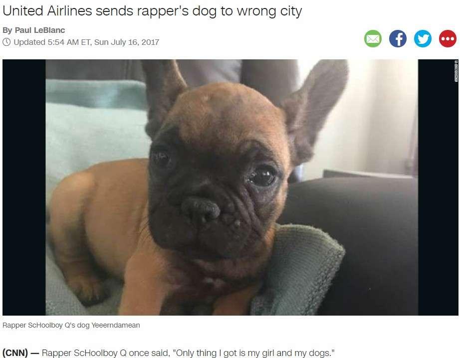 【海外発!Breaking News】ユナイテッド航空、今度は仔犬を違う便で別空港へ 「本当にメチャクチャだな」呆れる声(米) | Techinsight(テックインサイト)|海外セレブ、国内エンタメのオンリーワンをお届けするニュースサイト