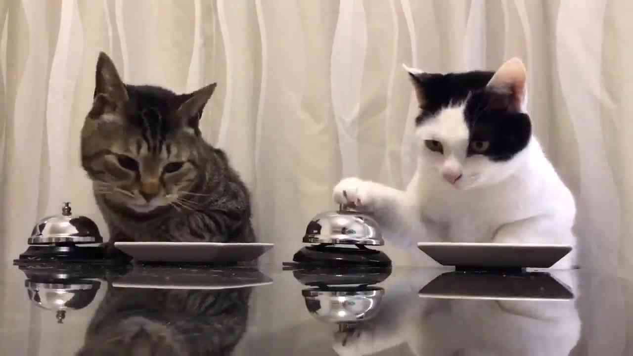 Cats : Waiter Please!! - YouTube