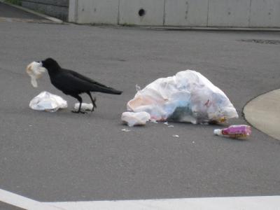 日本の野鳥を愛でるトピ