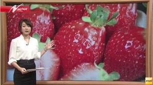 農業技術泥棒・韓国「