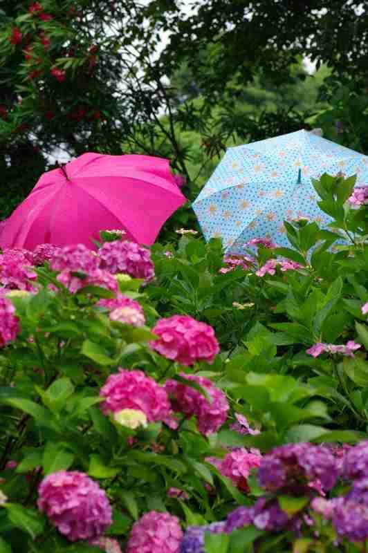 梅雨っぽい画像