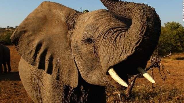 CNN.co.jp : 「第6の絶滅期」到来、想定よりも深刻か 動物の減少広範に - (1/2)