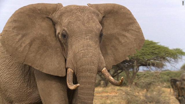 CNN.co.jp : 世界の野生動物、2020年までに3分の2絶滅も WWF