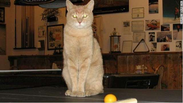 米アラスカ州の「猫市長」スタッブス、20歳で死去