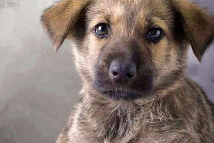 愛犬からの遺言「もし、ボクが死んだら」に絶対に涙してしまう | FUNDO[ファンドゥ]