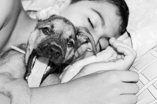ペットと「添い寝」、人間と同程度の効果? 豪研究者ら、メリットが大きいと推測 : Aging Style(エイジングスタイル)