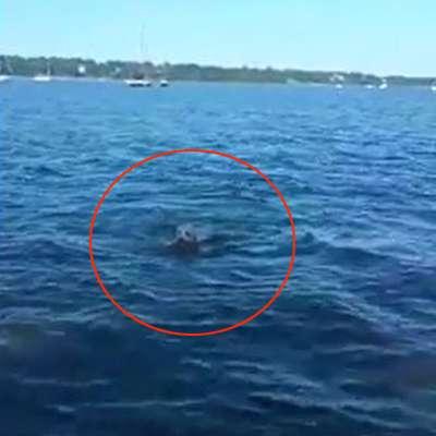 海で溺れる子鹿を泳いで救出したワンコに称賛の声