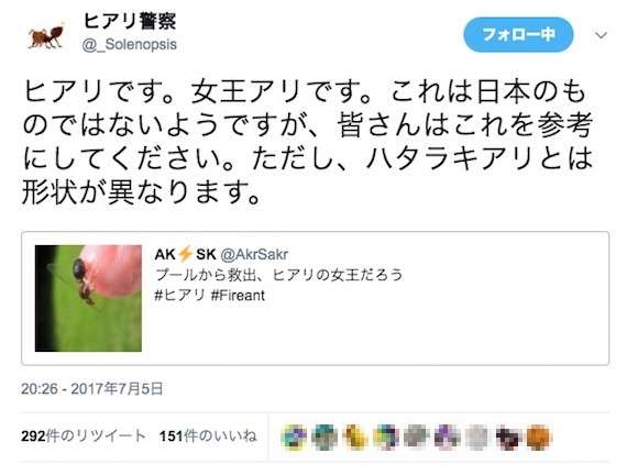 【超有能】ヒアリかどうか判別してくれるTwitterアカウント「ヒアリ警察」がマジでスゴい   ロケットニュース24