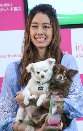 森泉、ペットのエサ代は月100万円以上とコメント!