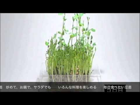 豆苗CMソング「売れてる編」 〜3番まで歌っちゃおう!〜 - YouTube