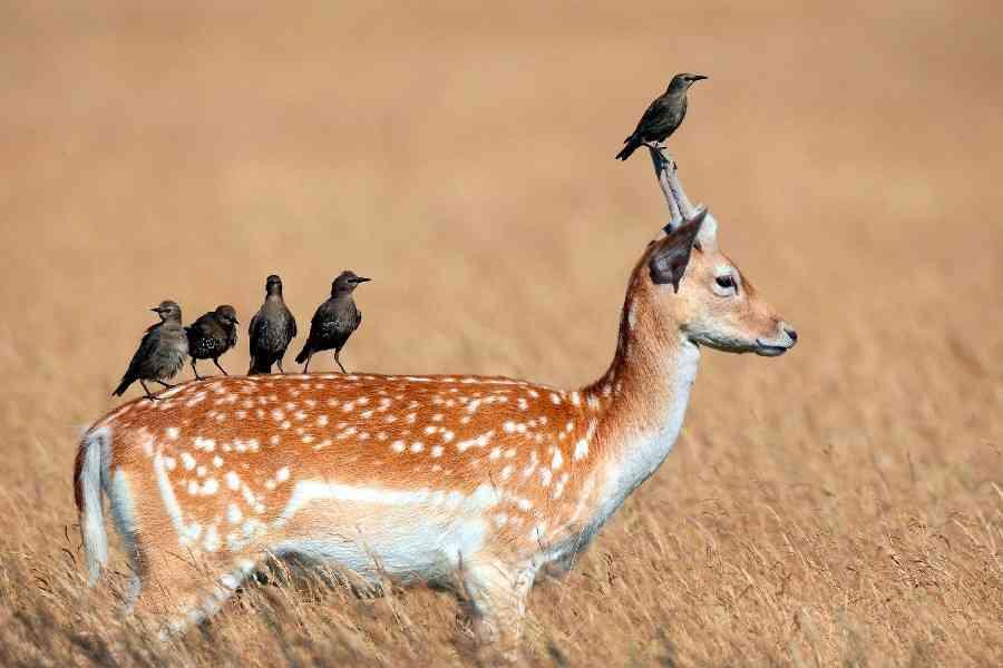 【画像】美しい動物達