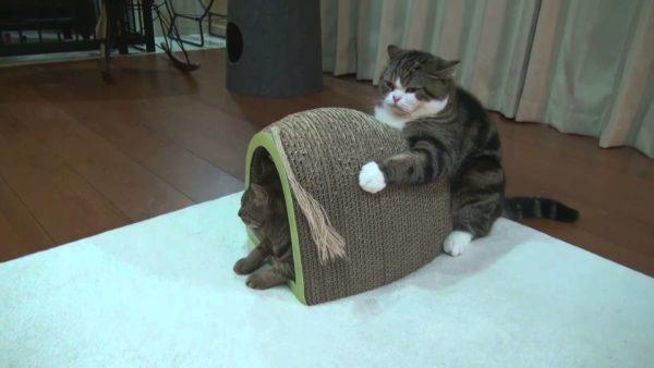 『使い方を間違えている』猫たちの画像いろいろ