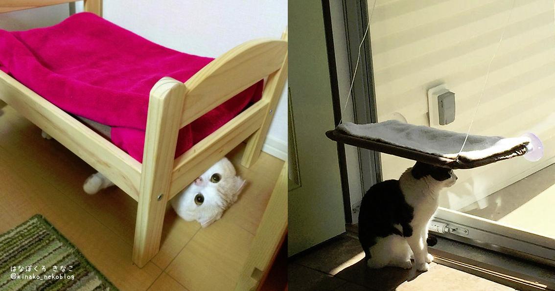 使い方を間違えている21匹の猫 | netgeek