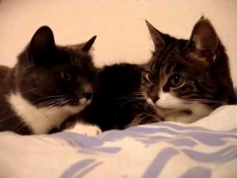 猫同士、何か会話してますw - YouTube