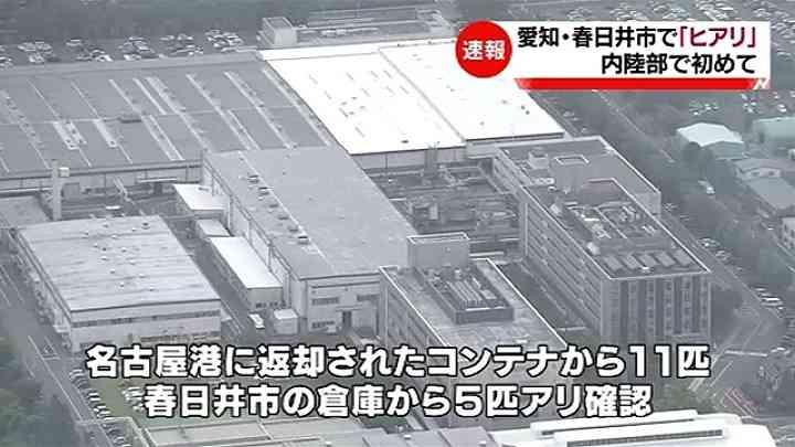 愛知・春日井市で「ヒアリ」発見、内陸部で初 TBS NEWS