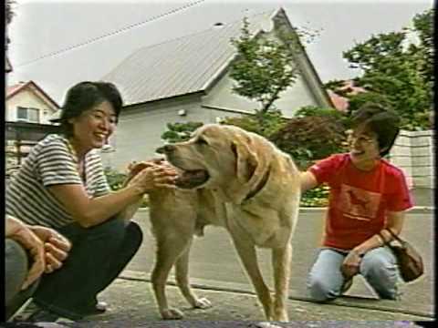 盲導犬~奇跡の瞬間~ - YouTube