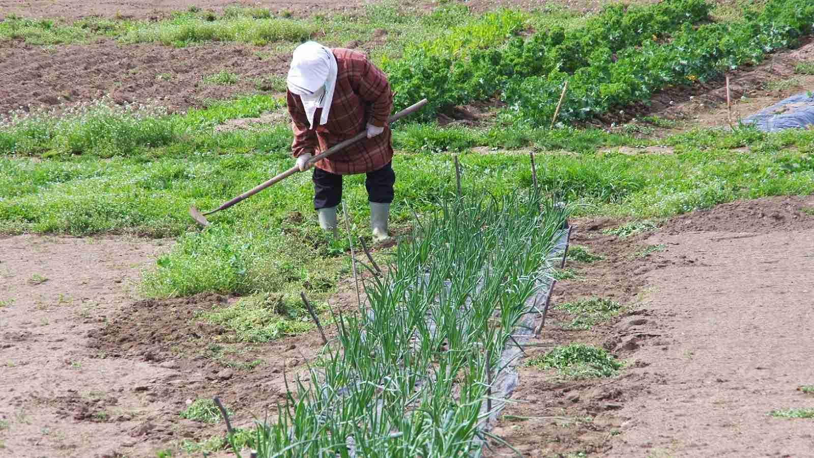 農業の「外国人就労特区」法案に潜む重大問題 | 政策 | 東洋経済オンライン | 経済ニュースの新基準