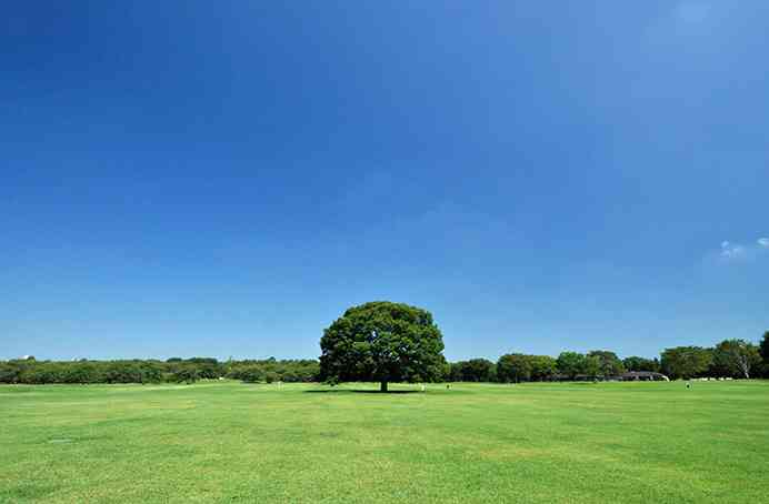 昭和記念公園を歩けば、年間約2億円の医療費を抑制する効果?国交省試算