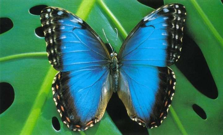 【苦手な人注意】美しい昆虫の画像を貼るトピ♪
