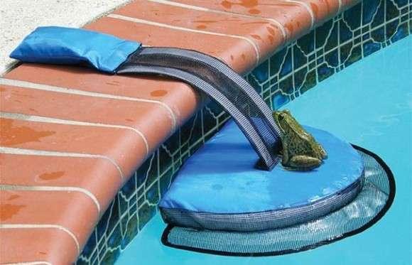 プールで溺れる小動物たちを救え! カエルやトカゲの脱出用ボート「フロッグ・ログ」は小さいけど大きな発明(爬虫類出演中) : カラパイア